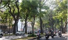 Sài Gòn lắng đọng những hàng cây