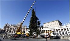 Khai mạc sớm cây thông Giáng sinh ở Vatican