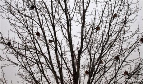 DỤ NGÔN GIÁNG SINH:  Đàn chim trốn tuyết