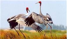 Chụp ảnh bảo vệ thú hoang dã và làm từ thiện