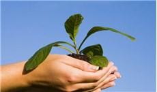 Đức Phanxicô sẽ ban thông điệp về môi sinh