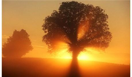 Bình minh/rạng đông/sáng sớm