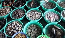 Thưởng thức vị hải sản trên đất Gò Công