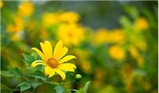 Mùa hoa yêu thương