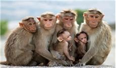 """""""Khỉ"""" như khỉ Cần Giờ"""