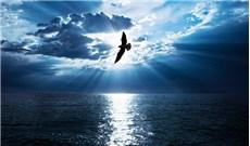 Có mối liên hệ nào giữa lòng biết ơn và đức tin ?