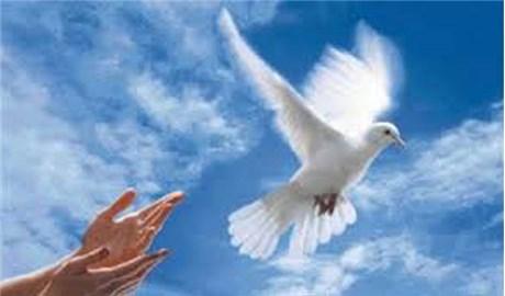 Sứ điệp của Đức Thánh Cha Phanxicô cho Ngày Hòa bình Thế giới lần thứ 50, 1 tháng 1 năm 2017