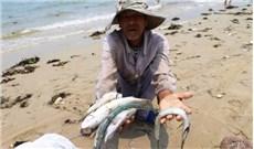 Thông báo của  Hội đồng Giám mục Việt Nam về tình trạng cá chết bất thường tại Miền Trung