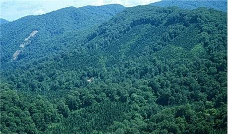 Quyết tâm giữ rừng