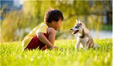 Ứng xử với thú cưng