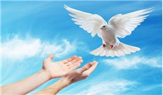 Quà tặng của Chúa Thánh Thần