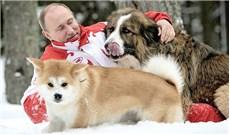 Bầy chó hiếm của tổng thống Nga
