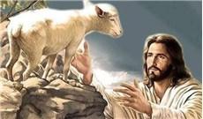Vì đoàn chiên và sứ vụ