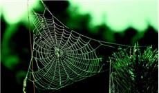 Từ màng tơ nhện giăng, nghĩ đến ngưỡng hạnh phúc...