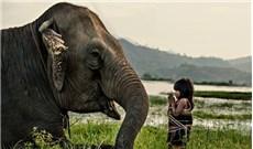 Châu Á cần sống tôn trọng thiên nhiên