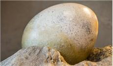 Người đầu tiên tìm ra trứng khủng long là một linh mục