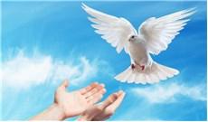 Kinh cầu xin hòa bình