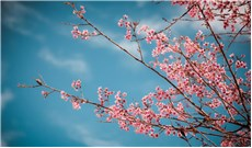 Áo mới những mùa xuân xưa