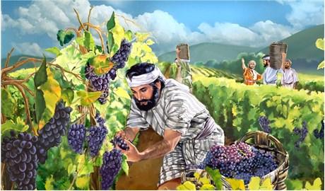 Ý thức mình là một vườn nho được Chúa ân cần chăm sóc
