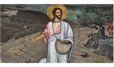 HỌC HỎI PHÚC ÂM CHÚA NHẬT XVI THƯỜNG NIÊN - NĂM A