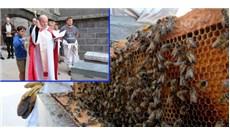 Nuôi ong trên tầng thượng nhà thờ Chánh tòa Saint-Flour