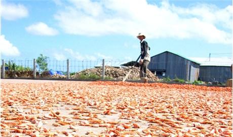 Nghề tôm khô ở vùng đất Tiệm Tôm