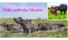 Trâu xanh cho Ukraine
