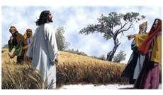 HỌC HỎI PHÚC ÂM CHÚA NHẬT XIV THƯỜNG NIÊN - NĂM B