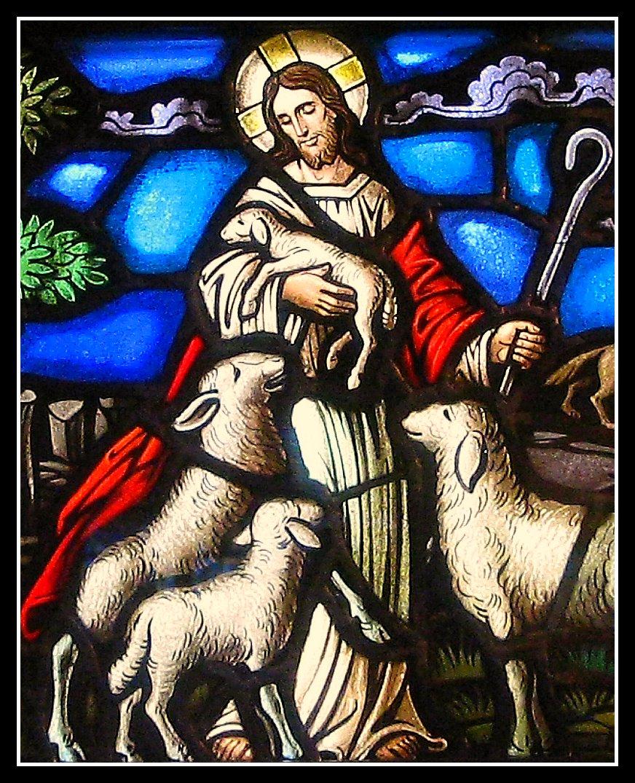 Chiên Thiên Chúa - Ảnh minh hoạ 3