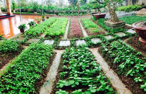 Cô giáo tiểu học mua 90 khối đất về cải tạo Vườn Rau đẹp như công ...